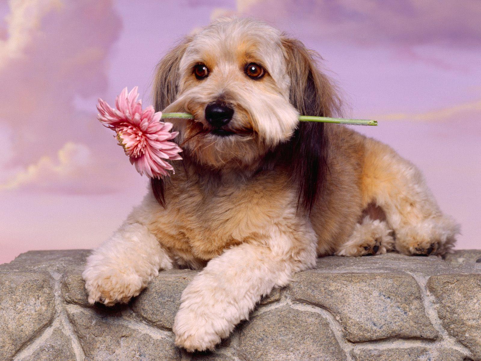 love-dog