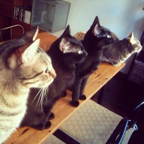 gatos maria