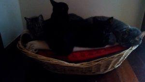 4 gatos 21 outubro 2016 - 6